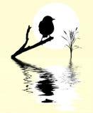 Bird on branch tree. Small bird on branch tree amongst water Stock Photography