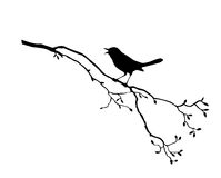 Bird on branch tree. Vector silhouette of the bird on branch tree Royalty Free Stock Photography