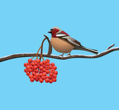 Bird on a branch of tree. Bird on a branch of rowan tree, vector