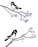 Bird on branch tree. Silhouette of the bird on branch tree Royalty Free Stock Image