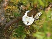 Bird, Branch, Tree, Beak Royalty Free Stock Images