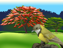 A bird at the branch of a tree. Illustration of a bird at the branch of a tree Stock Photos