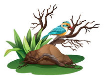 A bird at the branch of a tree. Illustration of a bird at the branch of a tree on a white background Royalty Free Stock Images