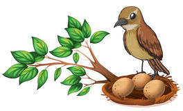 A bird at the branch of a tree watching the nest. Illustration of a bird at the branch of a tree watching the nest on a white background Royalty Free Stock Images