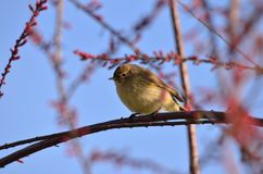 Bird on the branch of a tree. On the branch of the tree: Without worry sing. I, looking for the sound of peace in the song of the stones later, I know that my Stock Image