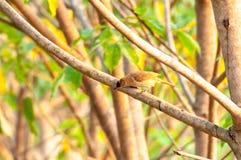 Bird on branch Royalty Free Stock Photos
