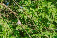 A bird on a branch. Watching little bird royalty free stock photos