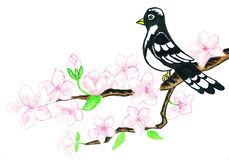 Bird on branch with white flowers, painting royalty free stock image