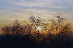 Bird in the Branches at Sunset Golden Hour. On a Winters Evening in the Malvern Hills Stock Photo