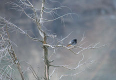 Bird on branches of the tree Royalty Free Stock Images