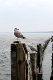 Bird on the breakwater Royalty Free Stock Photography