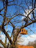Bird breeding box. Breeding shed for birds on a tree in spring day Stock Images