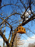 Bird breeding box. Breeding shed for birds on a tree in spring day Stock Photography
