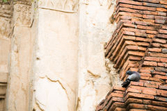 Bird and brick. Pigeon hanging on the brick ruins wall Royalty Free Stock Photos