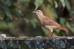 The bird royalty free stock photos