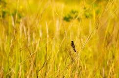 Bird in Brush Royalty Free Stock Photography