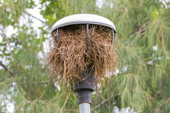 Bird build its nest from dried tree branches inside street lamp Stock Photo