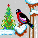 A bird is a bullfinch on the tree of wild ash and new-year tree. Illustration Stock Photo
