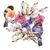 Bird bullfinch, willow  , watercolor, pattern Royalty Free Stock Photography