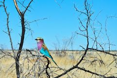 Bird in bush Royalty Free Stock Images