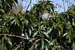 A Bird in the Bush Royalty Free Stock Images