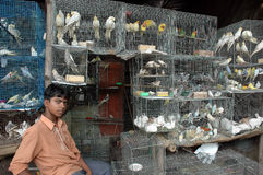 Bird Business in India. March 19, 2012  Kolkata, West Bengal, India - A young boy sale caged birds on the footpath of Kolkata Royalty Free Stock Photography