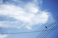 Bird on the cable and blue sky Stock Photography