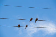Bird on cable line Royalty Free Stock Images