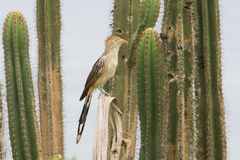 Bird on cactus Stock Photo
