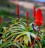 Bird & Cactus Flower Stock Photo