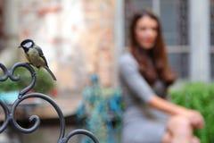Bird in cafe Stock Photos