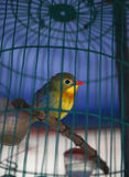 Bird Cage. A beautiful bird trapped in a cage Stock Image