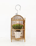 Bird cage. Flower in the bird cage Stock Image