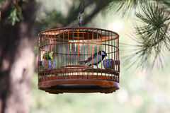 Bird in cage Stock Photo