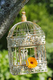 Bird cage Stock Photos