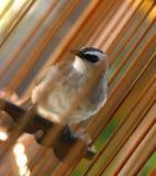 A bird in a cage Stock Photos