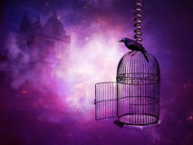 Bird cage Royalty Free Stock Images