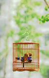 Bird in cage. Wood thrush bird in a cage in the glade in Beijing Royalty Free Stock Photos