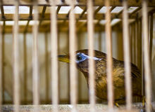 Bird in cage Royalty Free Stock Photos