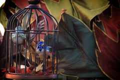 Bird Cage Autumn Stock Images