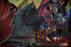Bird Cage in Autumn Royalty Free Stock Photos