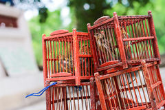 Bird in a Cage. Stock Image