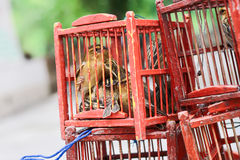 Bird in a Cage. Royalty Free Stock Photography