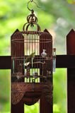 Bird in cage Royalty Free Stock Images