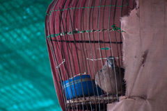 Bird Cage Stock Photo