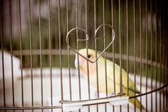 Bird in cage ,The confined animal torture. Bird in cage, The confined animal torture royalty free stock photo