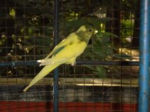 a bird in a cage  royalty free stock image