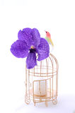 Bird with cage and flower Royalty Free Stock Photography