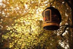 Bird cage in golden folium ginkgo Stock Photos