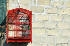 Bird in a cage Stock Image